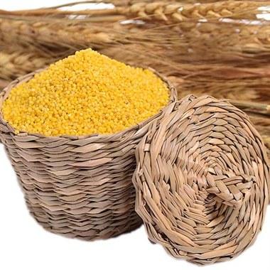 山东马坡金谷小米 750g 颗粒饱满 免淘洗 杂粮